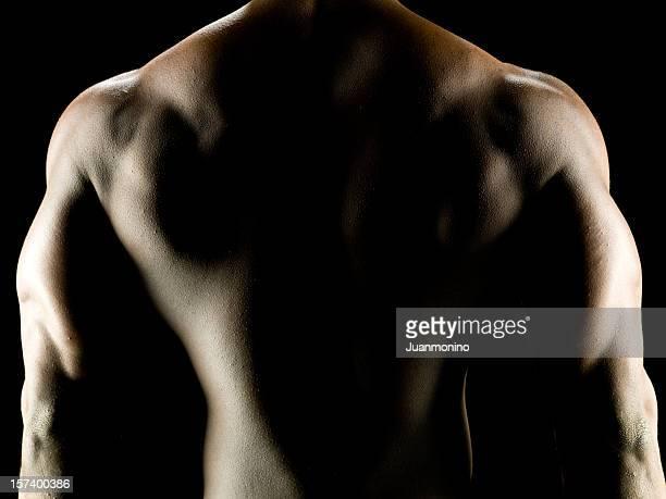 Muskeln in den Schultern