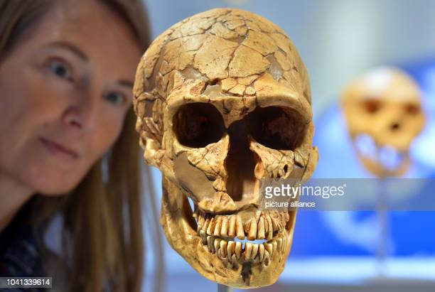 Museum educator Sabine Liener-Kraft looks at the replica of a skull of a Neanderthal a day before the official opening of the new State Museum of...
