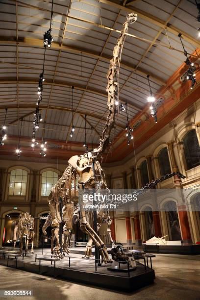 Museum fuer Naturkunde Berlin / Haupthalle mit dem Brachiosaurus Skelett