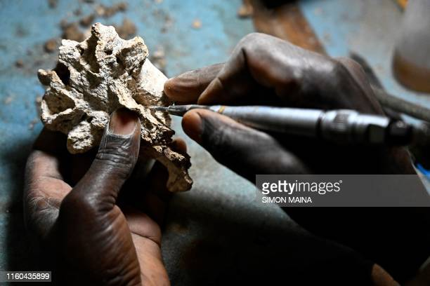 Museum staffer Blasto Onyango prepares a fossil for storage at the paleontology department of the Nairobi National Museum, in Nairobi on May 23,...