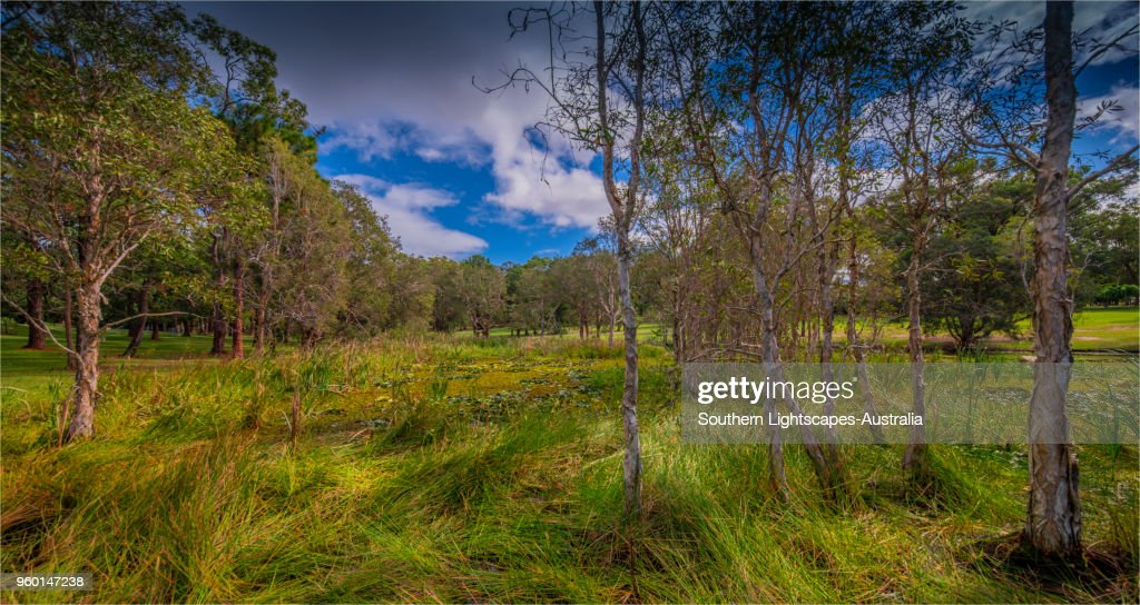 Musgrave Park, Southport, Gold coast, Queensland, Australia. : Stock-Foto