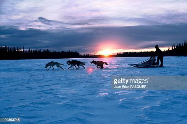 Musher and his sled dogs in Alaska United States On a frozen lake