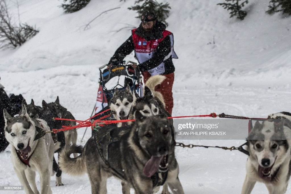 TOPSHOT - A musher and his sledding dogs race a stage in Val