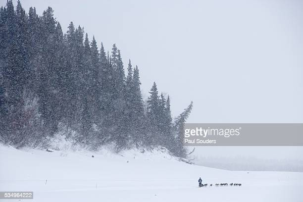 musher and team cross yukon river during iditarod race - iditarod stock pictures, royalty-free photos & images
