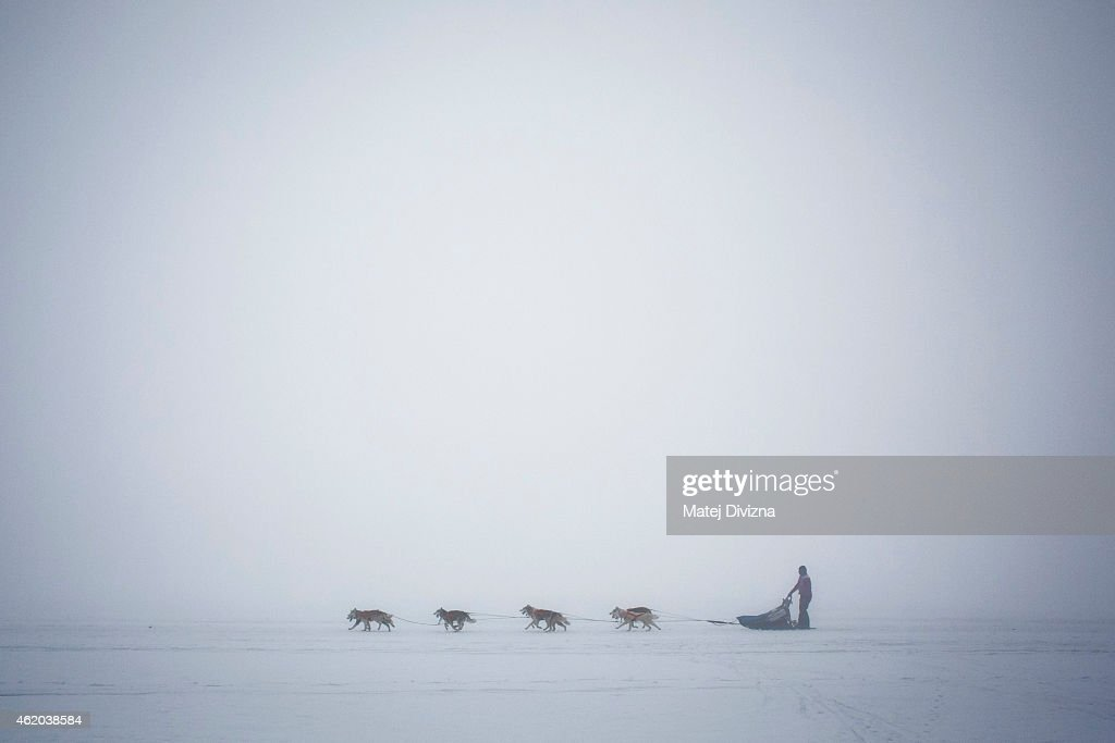 A musher competes with his dogs The Sedivackuv Long 2015 dog sled race in the Orlicke mountains on January 23, 2015, near the village of Destne v Orlickych horach near the Czech-Polish border. The four-day Sedivackuv Long, is with 88 mushers and 500 dogs this year. The dog sled race is the longest in the Czech Republic and one of the hardest races of its kind in Europe.