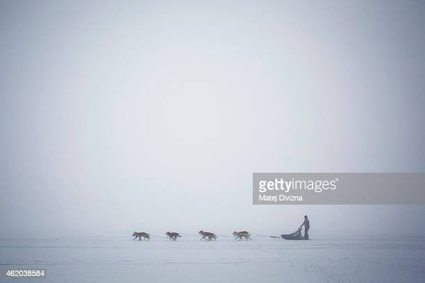 A musher competes with his dogs The Sedivackuv Long 2015 dog sled race in the Orlicke mountains on January 23 near the village of Destne v Orlickych...