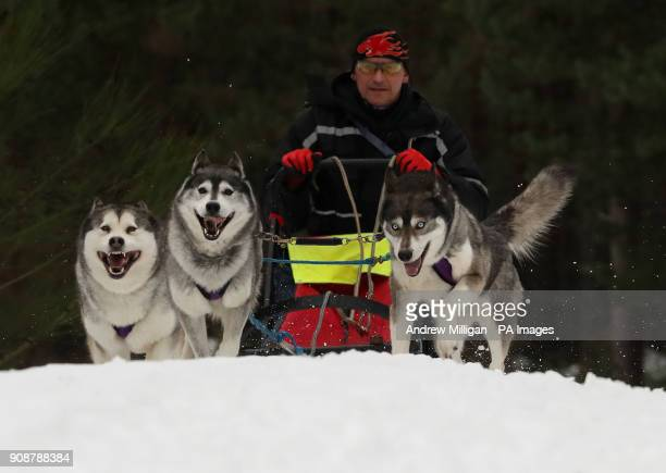 Musher Darren Lafevre races his huskies during a training session at Feshiebridge ahead of the The Siberian Husky Club of Great Britain's 35th...
