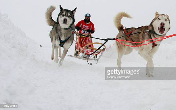 Musher Gerhard Gontow rides his sled dogs during the 2010 Pullman City Quest on January 10 2010 in Hasselfelde Germany The competition counts as one...