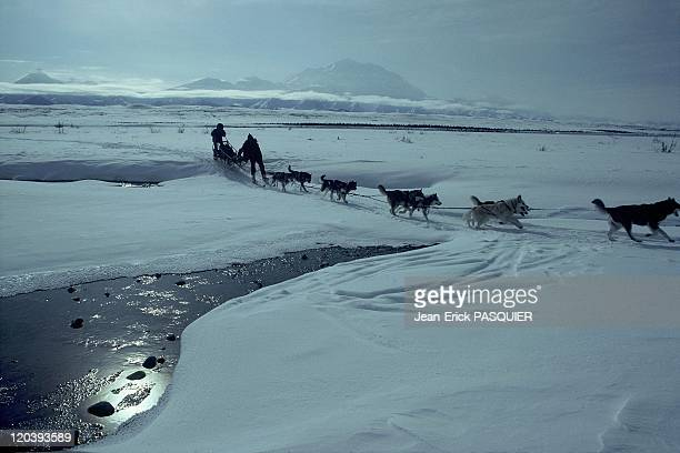 Musher in Alaska United States Musher and sled dogs in Denali National Park where is situated the highest peak of northern america the Mount McKinley...