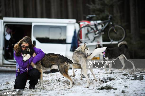 Musher Julie Platt and her huskies practice at a forest course ahead of the Aviemore Sled Dog Rally on January 23 2019 in Feshiebridge Scotland...