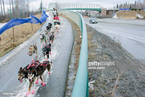 Musher Rick Casillo and his dog team mushed over minimal snow next to Tudor Road in Anchorage Alaska during the Ceremonial Start of the 2015 Iditarod...