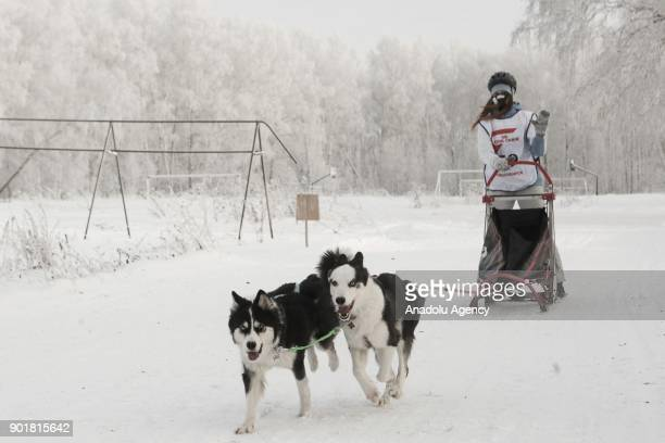 A musher rides on her sledge harnessed with Husky dogs ahead of the 2018 Christmas Ride Novosibirsk Region dog sledding championship at the...