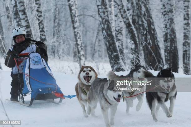 A musher rides on his sledge harnessed with Husky dogs ahead of the 2018 Christmas Ride Novosibirsk Region dog sledding championship at the...