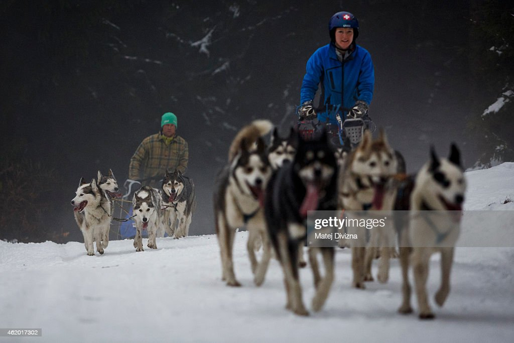 Mushers compete with their dogs The Sedivackuv Long 2015 dog sled race in the Orlicke mountains on January 23, 2015 near the village of Destne v Orlickych horach near the Czech-Polish border. The four-day Sedivackuv Long, is with 88 mushers and 500 dogs this year. The dog sled race is the longest in the Czech Republic and one of the hardest races of its kind in Europe.