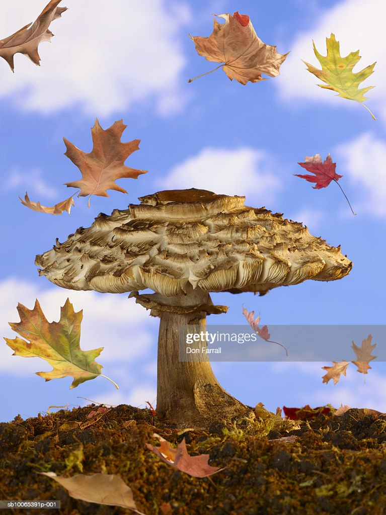 Mushroom against blue sky with leaves falling (Digital Composite) : Foto stock