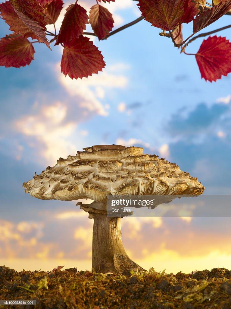 Mushroom against sunset sky (Digital Composite) : Foto stock