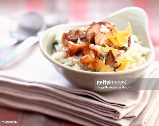 Mushroom and Mimolette cheese risotto