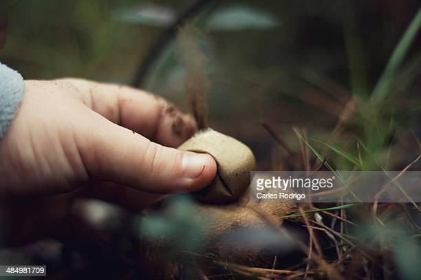mushroom expelling spores - seta pedo de lobo fotografías e imágenes de stock