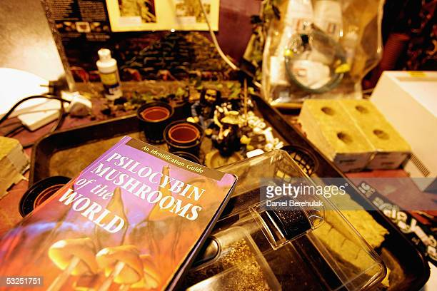 Mushroom growing kits lay on display in a store on July 18 2005 in London England The sale of fresh mushrooms has been prohibited as of today due to...
