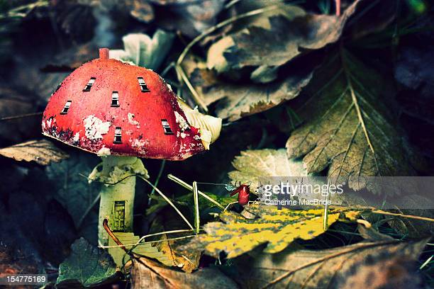mushroom home - catherine macbride stockfoto's en -beelden