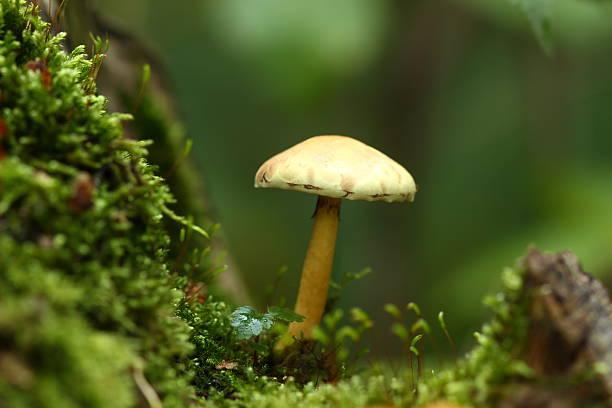 Mushroom In A Woodland Glade Wall Art