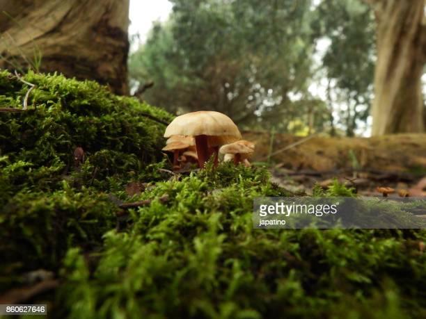 Mushroom in the field