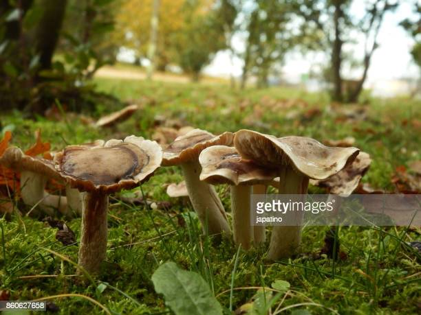 mushroom in the field - magic mushroom stock photos and pictures
