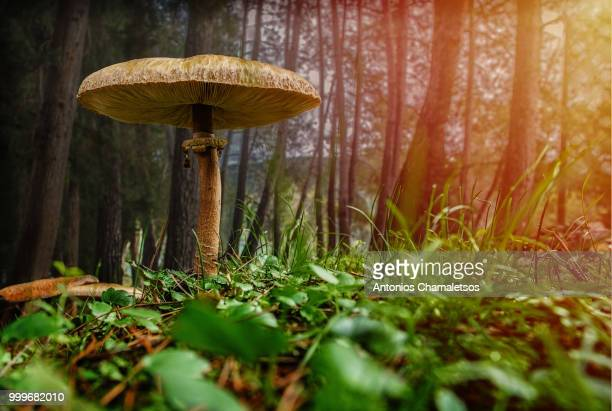 mushroom in the forest - fungus stock pictures, royalty-free photos & images