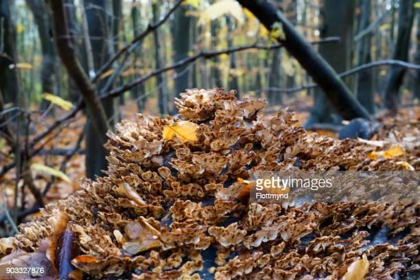 Mushroom Mountain on a dead tree