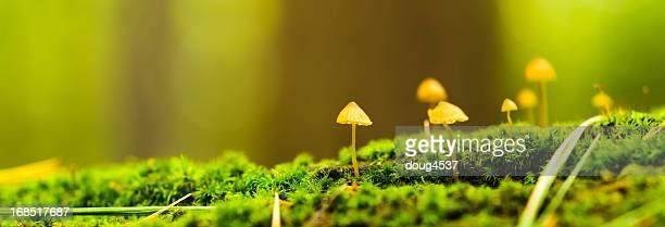 Mushroom Panorama