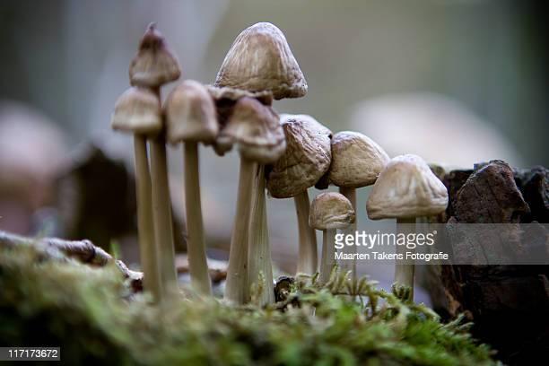 mushroom - arnhem stockfoto's en -beelden