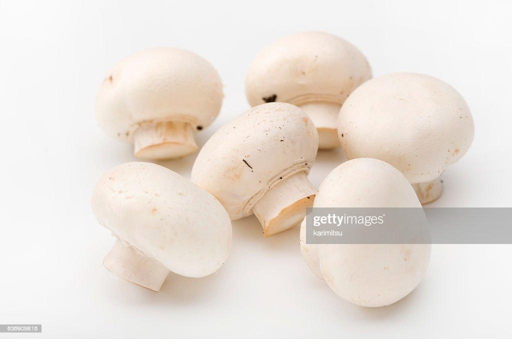Mushroom : Stock Photo