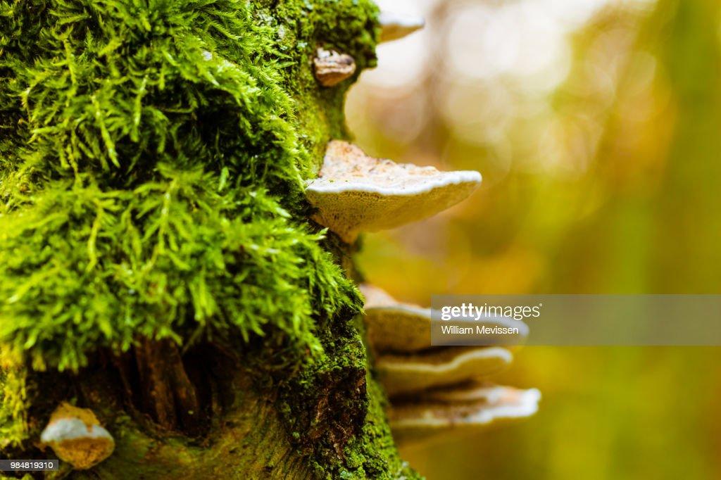Mushroom Tree : Stockfoto