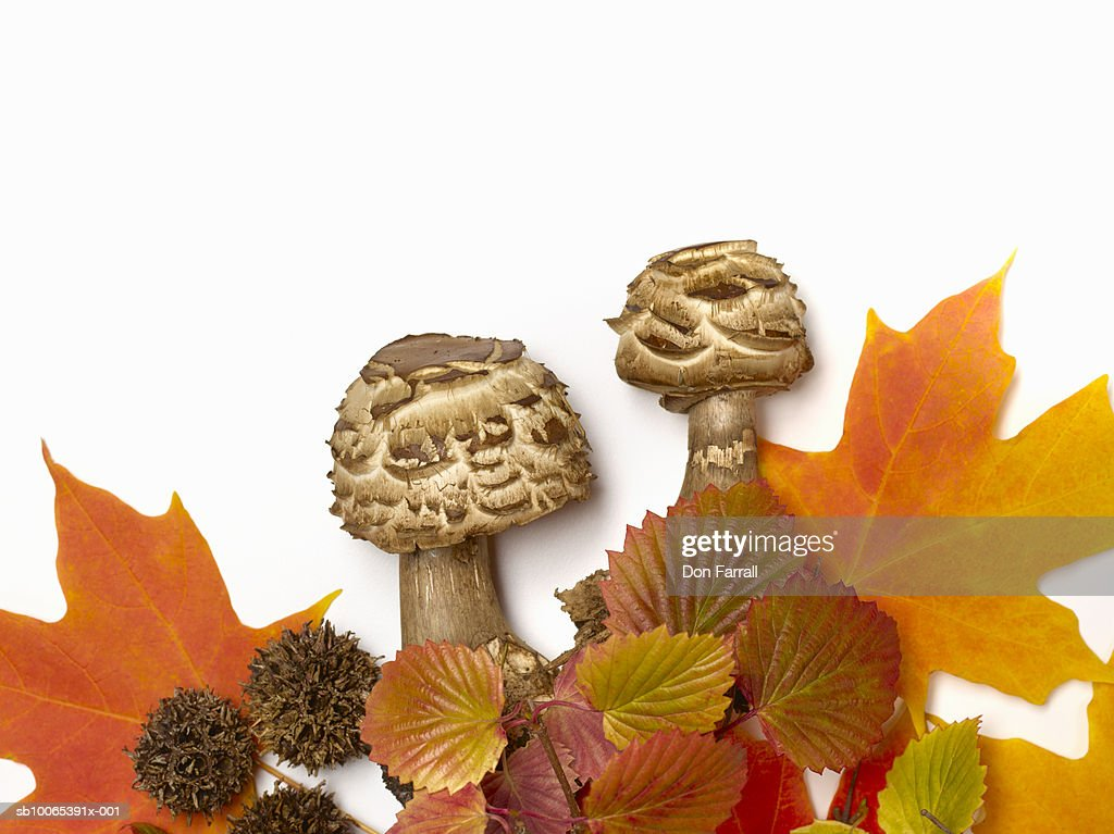 Mushrooms and autumn leaves on white background : Foto stock