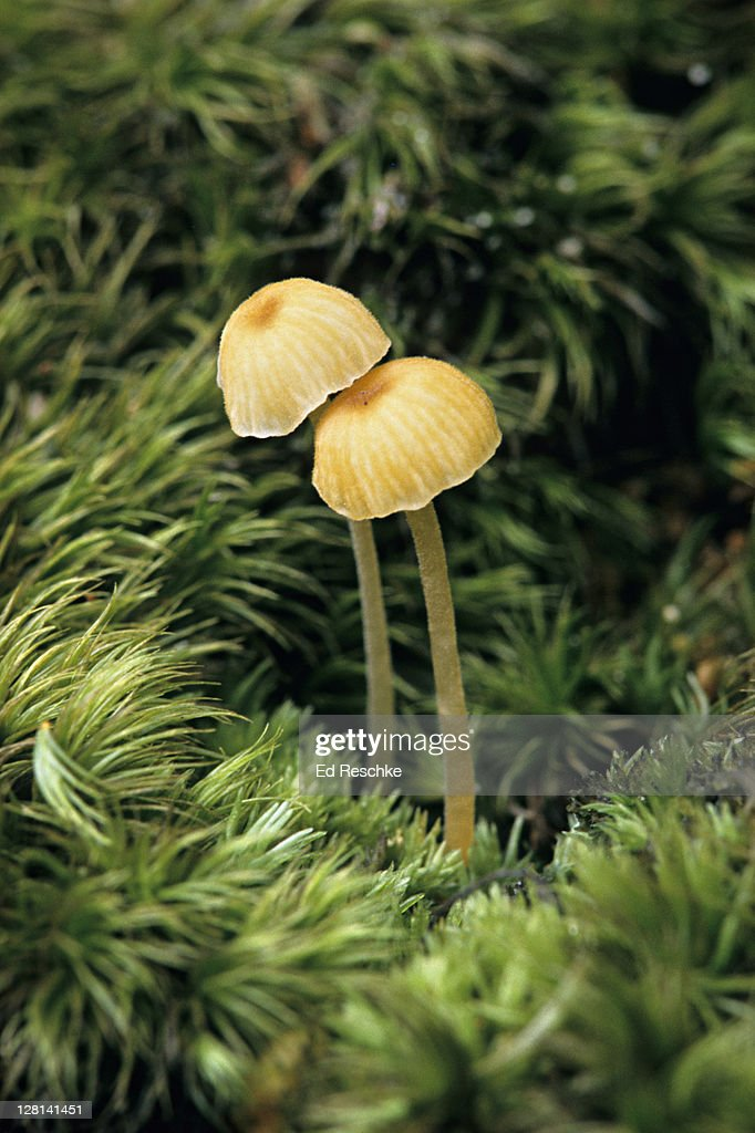 mushrooms and moss autotroph and heterotroph stock photo getty images