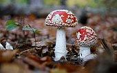 mushrooms hd images