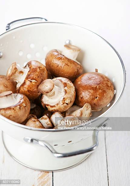 Mushrooms in colander on textured white background