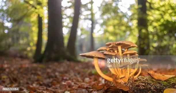 mushrooms in the forest during a beautiful fall day - drenthe stock pictures, royalty-free photos & images