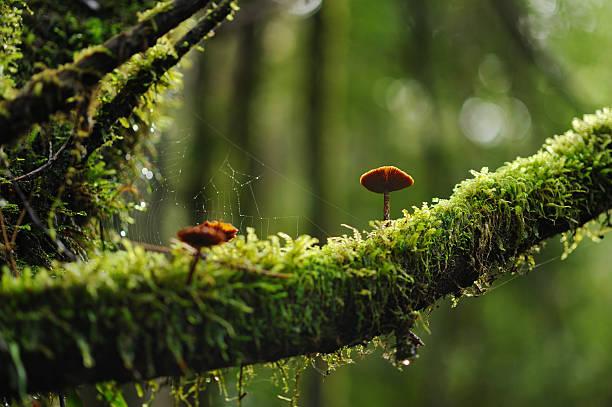 Mushrooms In The Woods Wall Art