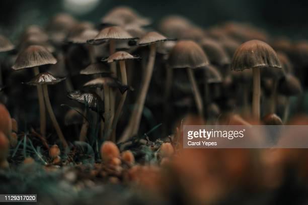 mushrooms on the forest - psychedelisch stockfoto's en -beelden