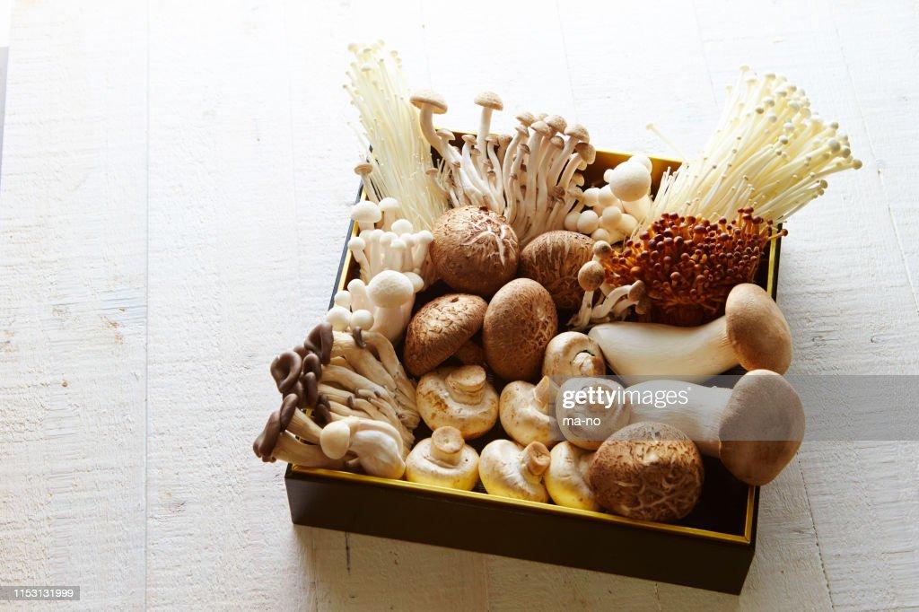 Mushrooms : Stock Photo