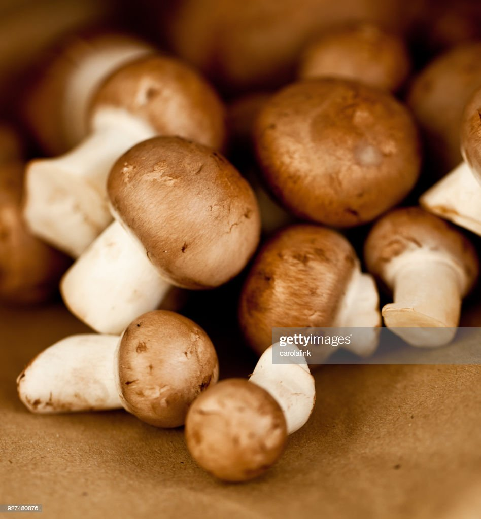 Mushrooms : Stock-Foto