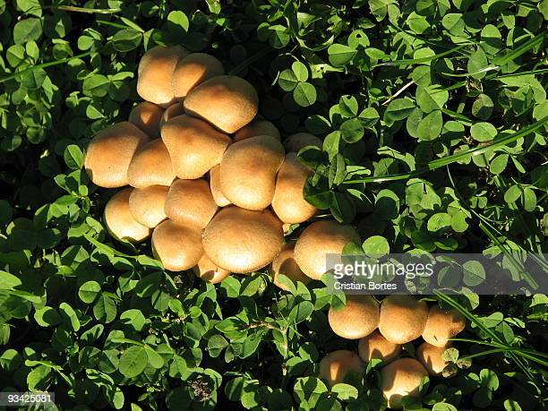mushrooms - bortes stock pictures, royalty-free photos & images