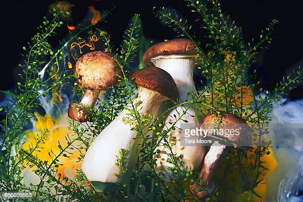 mushrooms shot underwater
