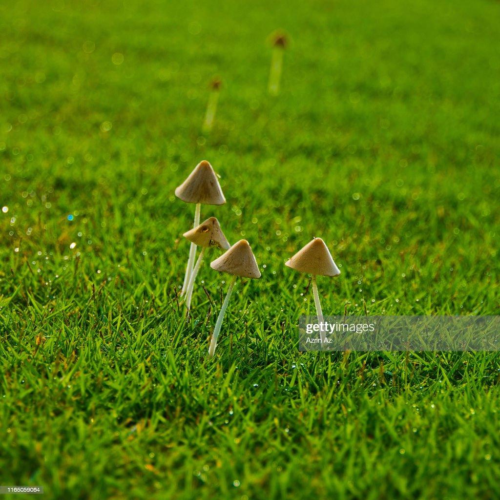 Mushy Mushrooms : Stock Photo