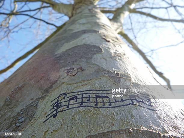 music in nature - clave de sol fotografías e imágenes de stock