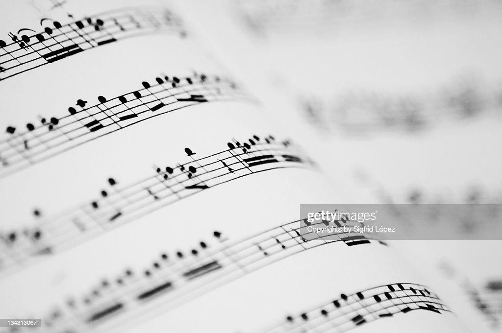Music partitures : Foto de stock