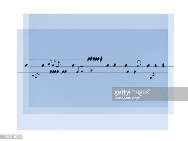 musical score of birds on wires of light.  digital assembly - 詠唱 ストックフォトと画像