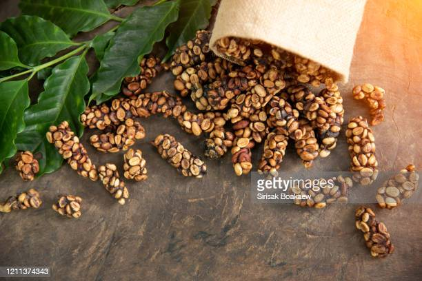 musk coffee selective focus raw coffee beans - civet cat stock pictures, royalty-free photos & images