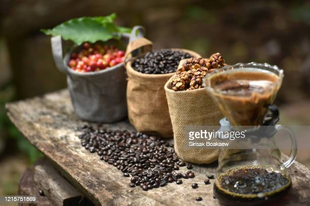 musk coffee selective focus raw coffee beans - caffeine stock pictures, royalty-free photos & images